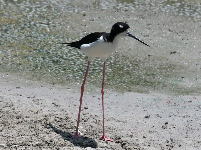 Image result for animals with skinny legs